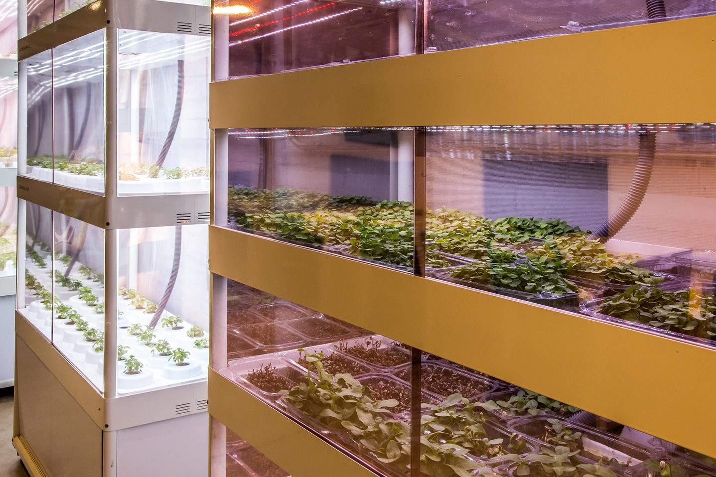 Módulos estufa de cultivo foto: Emmanuel Denauí