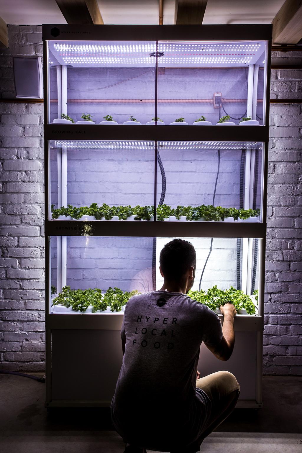 módulos estufa de cultivo