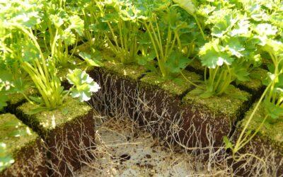 5 dicas para turbinar as plantas do jardim
