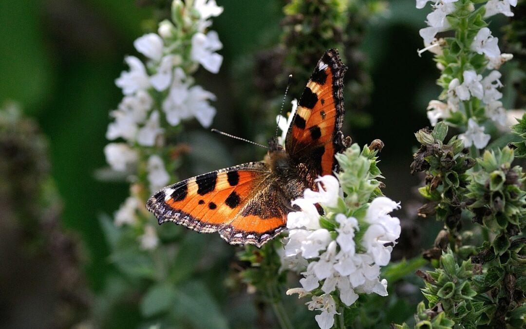 Como lidar com as lagartas que atacam as plantas sem usar venenos
