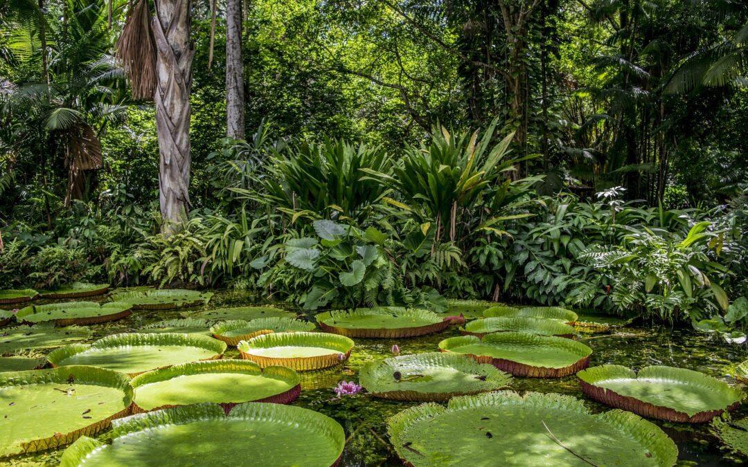 Porque a biodiversidade é fundamental para a vida