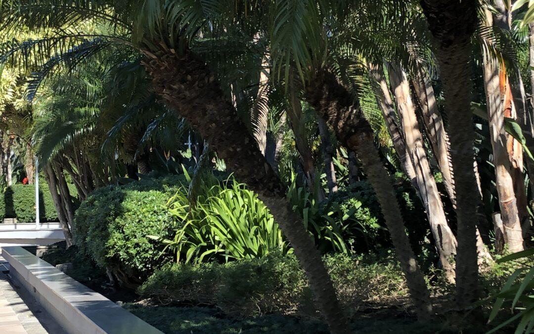 Palmeira fenix valoriza o jardim